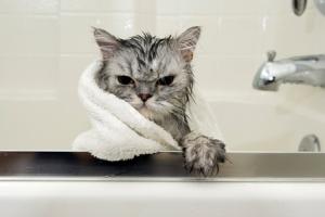 wet cat 2